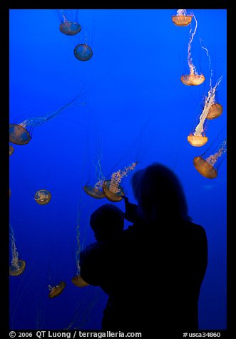 Woman holding child in front of jellyfish, Monterey Bay Aquarium. Monterey, California, USA