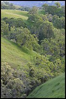 Oaks and hills in late spring. San Jose, California, USA ( color)