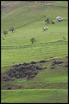 Hillside pastures in spring, Mount Hamilton Range foothills. San Jose, California, USA