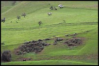 Hillside farmlands in spring, Mount Hamilton Range foothills. San Jose, California, USA