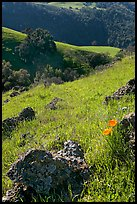 Rocks, poppies, and hillsides, Sunol Regional Park. California, USA (color)