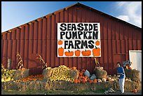 Woman checking out pumpkins in front of red barn. California, USA