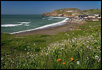 Rockaway Beach and wildflowers, Pacifica. San Mateo County, California, USA ( color)