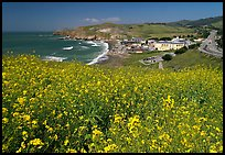 Yellow mustard flowers, beach and highway, Pacifica. San Mateo County, California, USA (color)