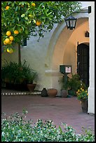 Orange tree and arch, Allied Arts Guild. Menlo Park,  California, USA ( color)