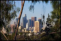 Downtown skyline seen through trees. Los Angeles, California, USA ( color)