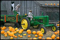 Green tractor, pumpkins, figures, and barn. Half Moon Bay, California, USA (color)