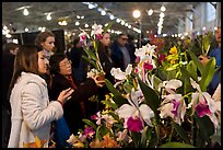 Women look at orchids during festival, Mason Center. San Francisco, California, USA (color)
