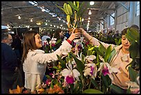 Woman buys orchid plant, Mason Center. San Francisco, California, USA ( color)