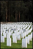 Headstones, San Francisco National Cemetery, Presidio. San Francisco, California, USA ( color)