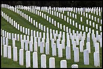 Graves, San Francisco National Cemetery, Presidio. San Francisco, California, USA ( color)