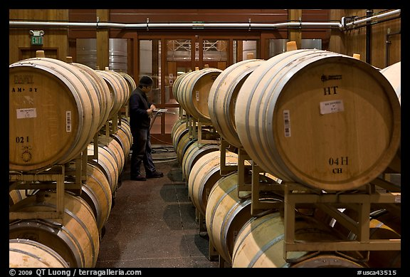 Winemaker checking barrels of wine being aged. Napa Valley, California, USA