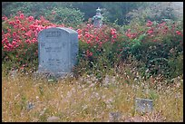 Headstone and wildflowers in fog, Manchester. California, USA