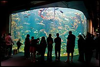 Tourists in front of large tank, Steinhart Aquarium, California Academy of Sciences. San Francisco, California, USA<p>terragalleria.com is not affiliated with the California Academy of Sciences</p> (color)