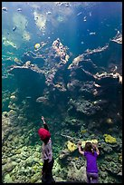Children in front of Coral Reef tank, Steinhart Aquarium, California Academy of Sciences. San Francisco, California, USA<p>terragalleria.com is not affiliated with the California Academy of Sciences</p> (color)