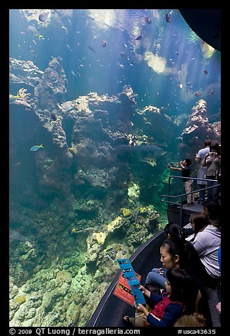 Families look at the large  Philippine Coral Reef tank, California Academy of Sciences. San Francisco, California, USA<p>terragalleria.com is not affiliated with the California Academy of Sciences</p>