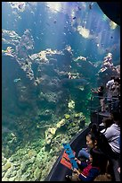 Families look at the large  Philippine Coral Reef tank, California Academy of Sciences. San Francisco, California, USA<p>terragalleria.com is not affiliated with the California Academy of Sciences</p> (color)