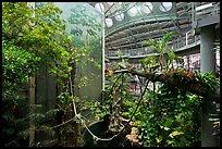 Four-story Rainforest exhibit, California Academy of Sciences. San Francisco, California, USA<p>terragalleria.com is not affiliated with the California Academy of Sciences</p> (color)