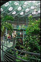 Tourists on spiraling path look at rainforest canopy, California Academy of Sciences. San Francisco, California, USA<p>terragalleria.com is not affiliated with the California Academy of Sciences</p> (color)