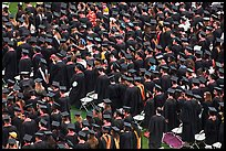 Rows of graduates in academic costume. Stanford University, California, USA (color)