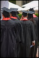 Graduates with robes and square caps seen from behind. Stanford University, California, USA (color)
