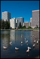 Ducks and skyline, Lake Merritt. Oakland, California, USA (color)