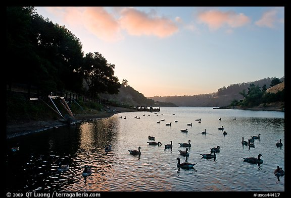 Large flock of ducks at sunset, Lake Chabot, Castro Valley. Oakland, California, USA