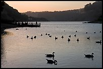 Ducks and pier at sunset, Lake Chabot, Castro Valley. Oakland, California, USA (color)