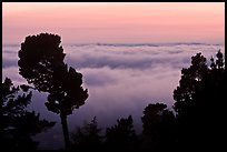 Low clouds at sunset seen from foothills. Oakland, California, USA (color)