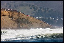 Bluff with spectators as seen from the ocean. Half Moon Bay, California, USA ( color)