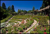Terraced Amphitheater, Rose Garden. Berkeley, California, USA (color)