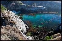 Rocks, water, and kelp, China Cove. Point Lobos State Preserve, California, USA ( color)