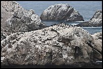 Bird island. Point Lobos State Preserve, California, USA
