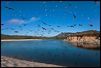Birds flying above Carmel River. Carmel-by-the-Sea, California, USA