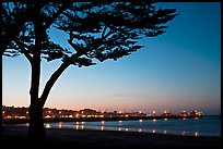 Monterey harbor and cypress tree at sunset. Monterey, California, USA ( color)