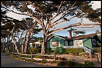 Residential homes and cypress trees. Carmel-by-the-Sea, California, USA ( color)