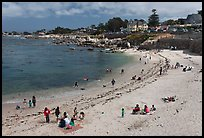 Picnic, Lover s Point Beach. Pacific Grove, California, USA ( color)