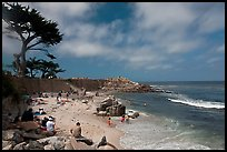 Cypress and beach, Lovers Point Park. Pacific Grove, California, USA ( color)
