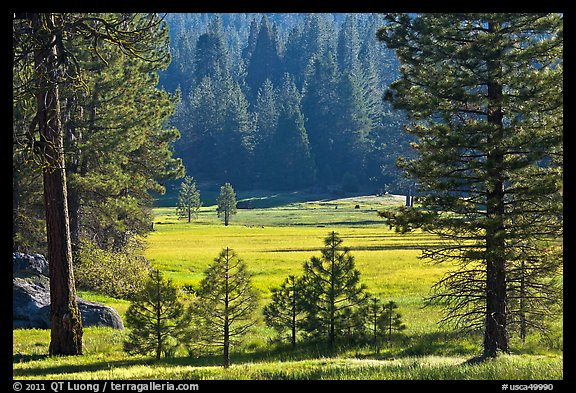Indian Basin Meadow framed by pines. Giant Sequoia National Monument, Sequoia National Forest, California, USA (color)