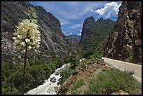 Yucca, river, and road in Kings Canyon, Giant Sequoia National Monument near Kings Canyon National Park. California, USA (color)