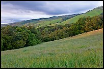 Hills in spring, Evergreen. San Jose, California, USA