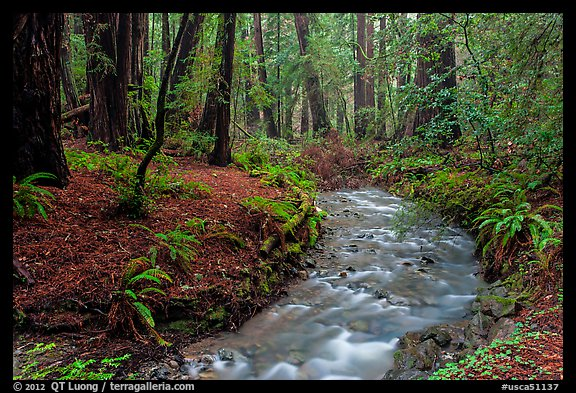 Kalifornia Stream