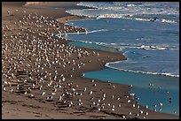 Seabirds, Waddell Beach. California, USA