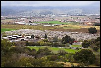 Orchards, fields, and houses from above, Morgan Hill. California, USA ( color)