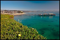 Iceplant-coverd buff and pier. Capitola, California, USA (color)
