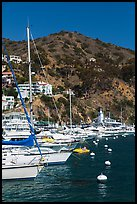 Yachts, Avalon harbor, Catalina Island. California, USA (color)