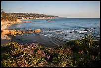 High bluff with flowers overlooking coastline in late afternoon. Laguna Beach, Orange County, California, USA ( color)