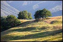 Oaks and hills, Temblor Range. California, USA ( color)