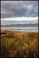 Grasses, Soda Lake with reflections of Temblor Range. Carrizo Plain National Monument, California, USA ( color)