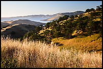 Grasses, oaks, and hills above San Luis Reservoir. California, USA ( color)